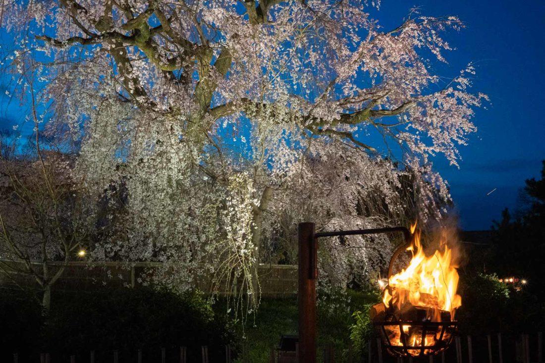 Cerisier pleurant la nuit avec une lanterne de feu dans le parc Maruyama, Kyoto