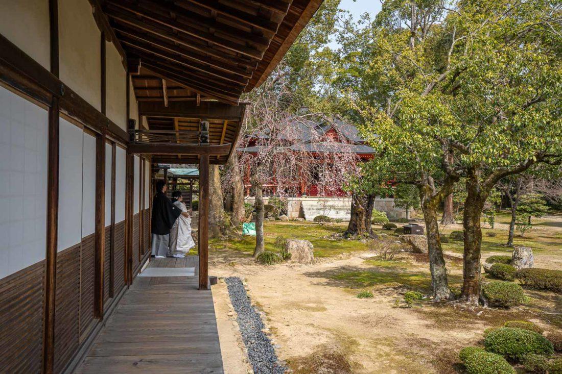 Séance photo de mariage par un cerisier dans la cour du temple Daikaku-ji, Kyoto