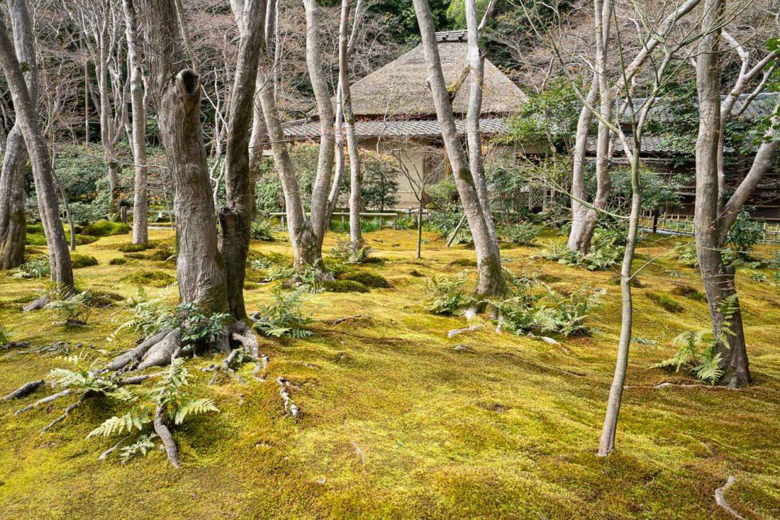 Temple Gio-ji Moss à Arashiyama, Kyoto