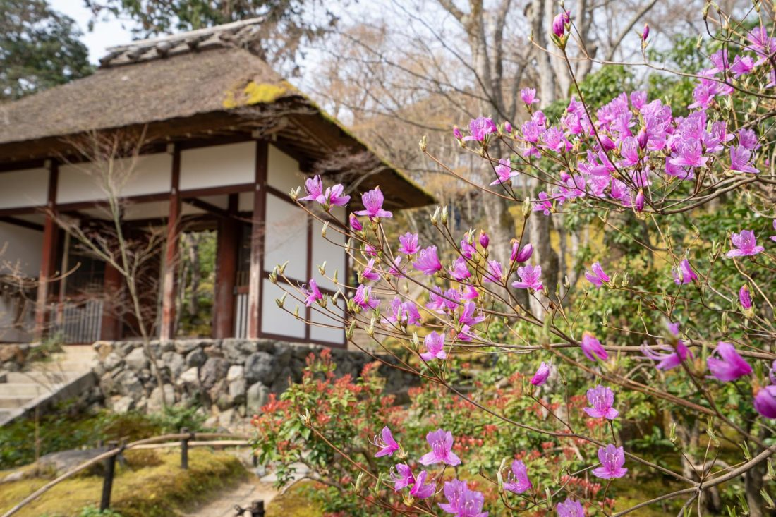 Jojakko-ji, un joyau caché à Arashiyama, Kyoto