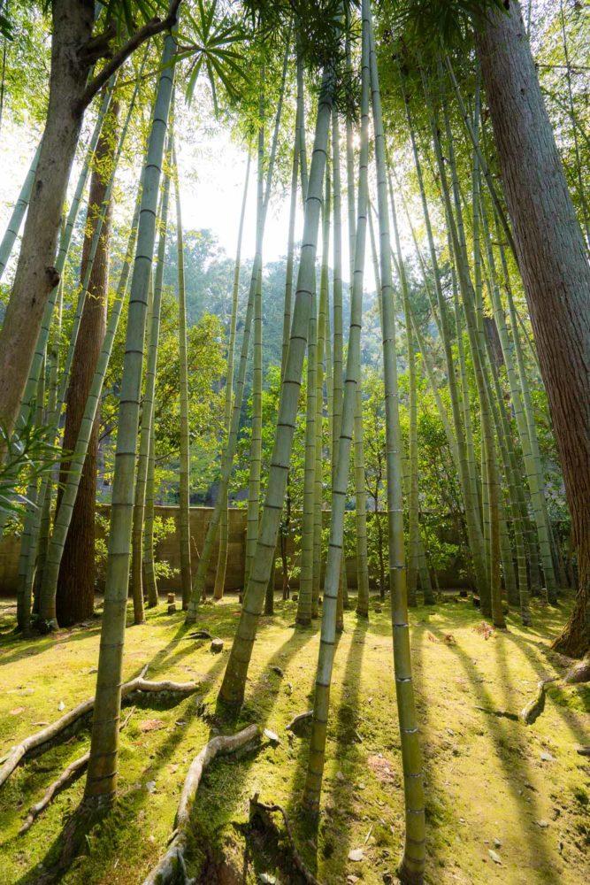 Bambou à Tenjuan à Nanzenji, Kyoto