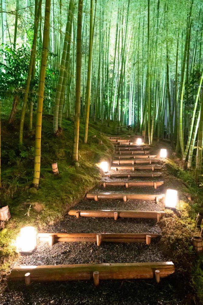 La bambouseraie de Kodaiji, Kyoto