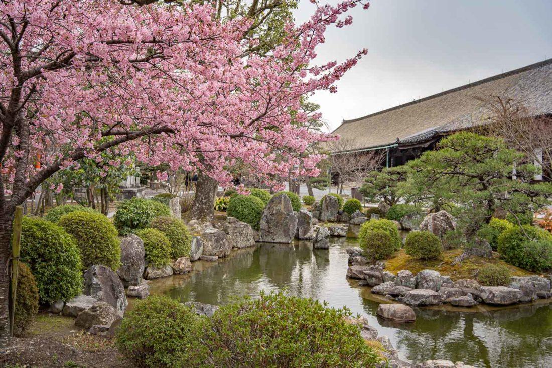 Fleurs de prunier dans les jardins du temple Sanjusangendo à Kyoto
