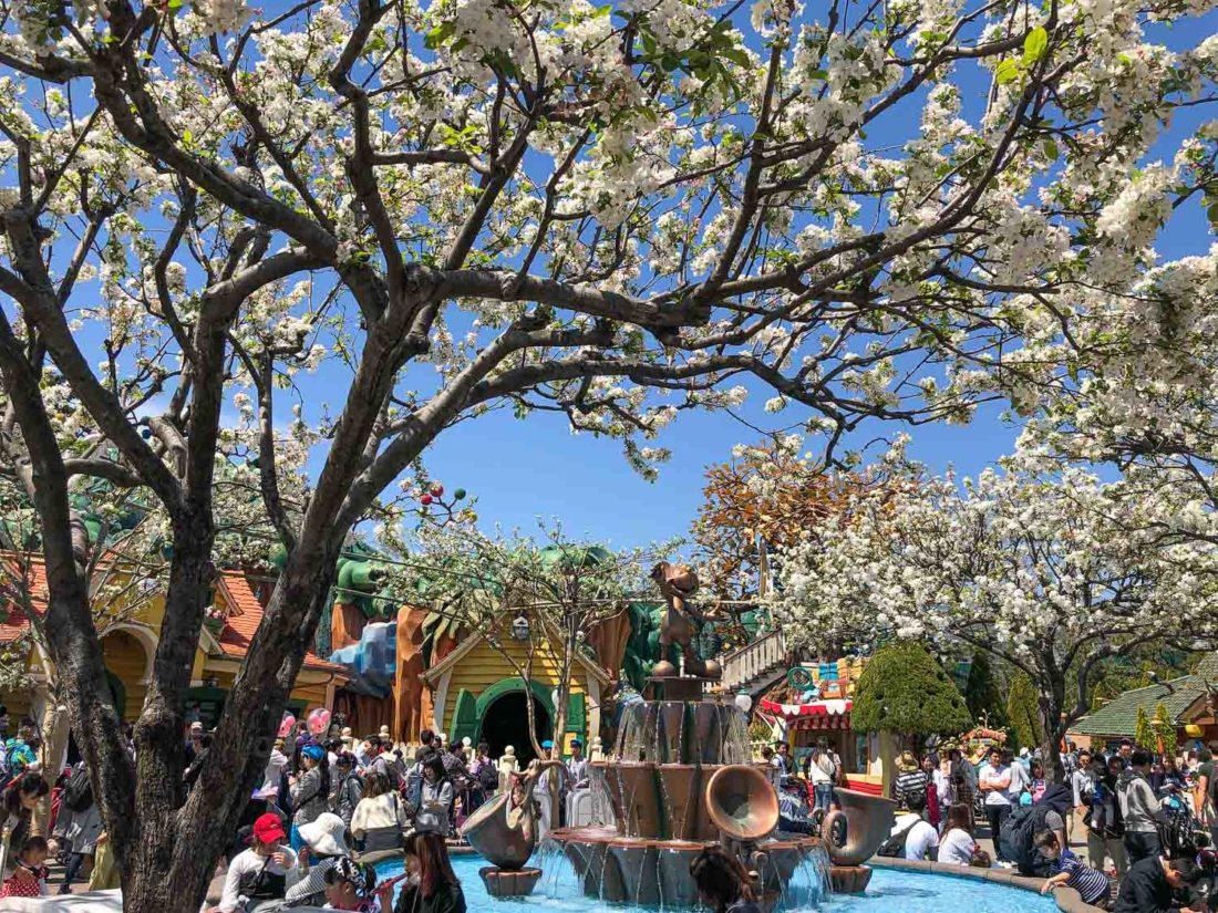 Fleurs de cerisier à Tokyo Disneyland Toontown en avril