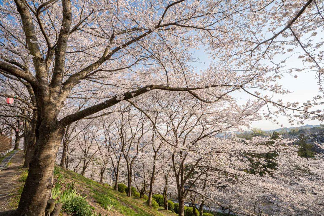 "Jardin botanique Handayama d'Okayama City à Okayama au Japon ""width ="" 1100 ""height ="" 733"