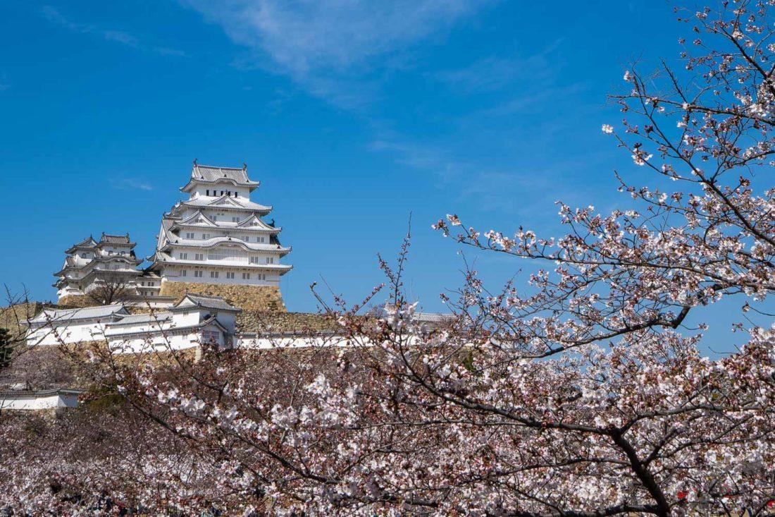 """Château de Hineji en saison des fleurs de cerisier """"width ="""" 1100 """"height ="""" 733"""