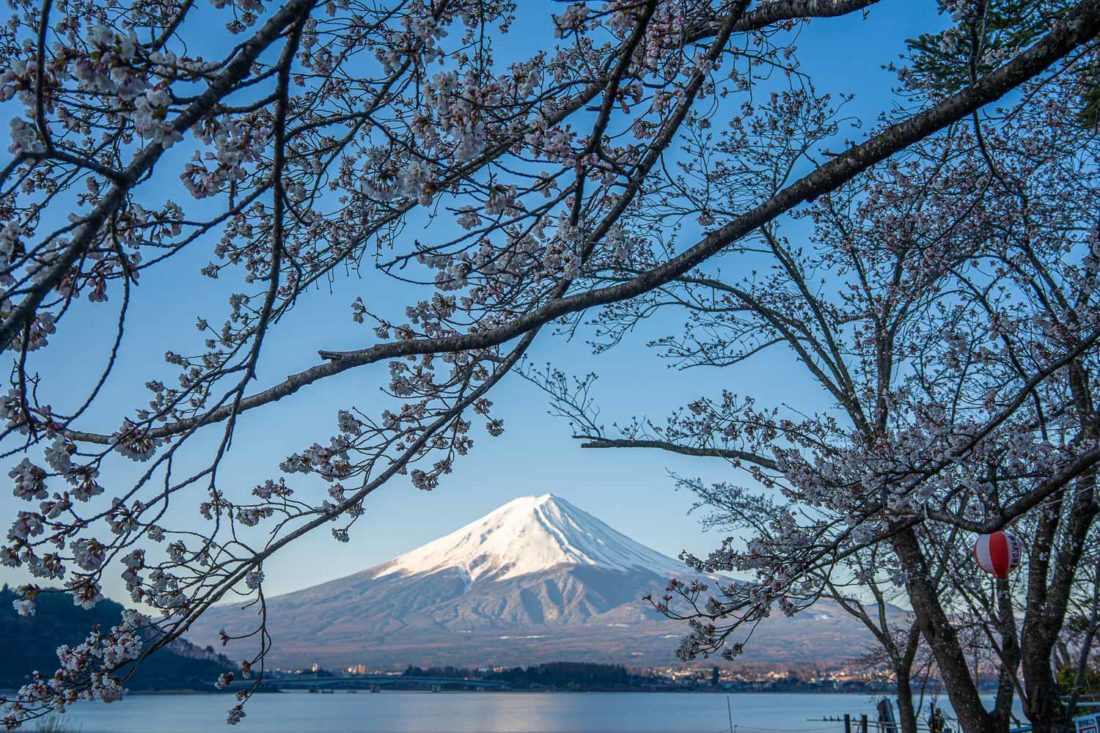 Fleur de cerisier et mont Fuji sur la rive nord du lac Kawaguchiko