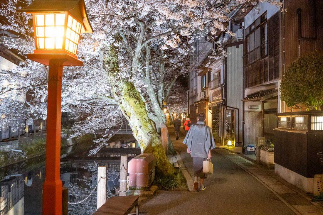 Visiteur de Kinosaki Onsen en kimono la nuit par le canal bordé de fleurs de cerisier