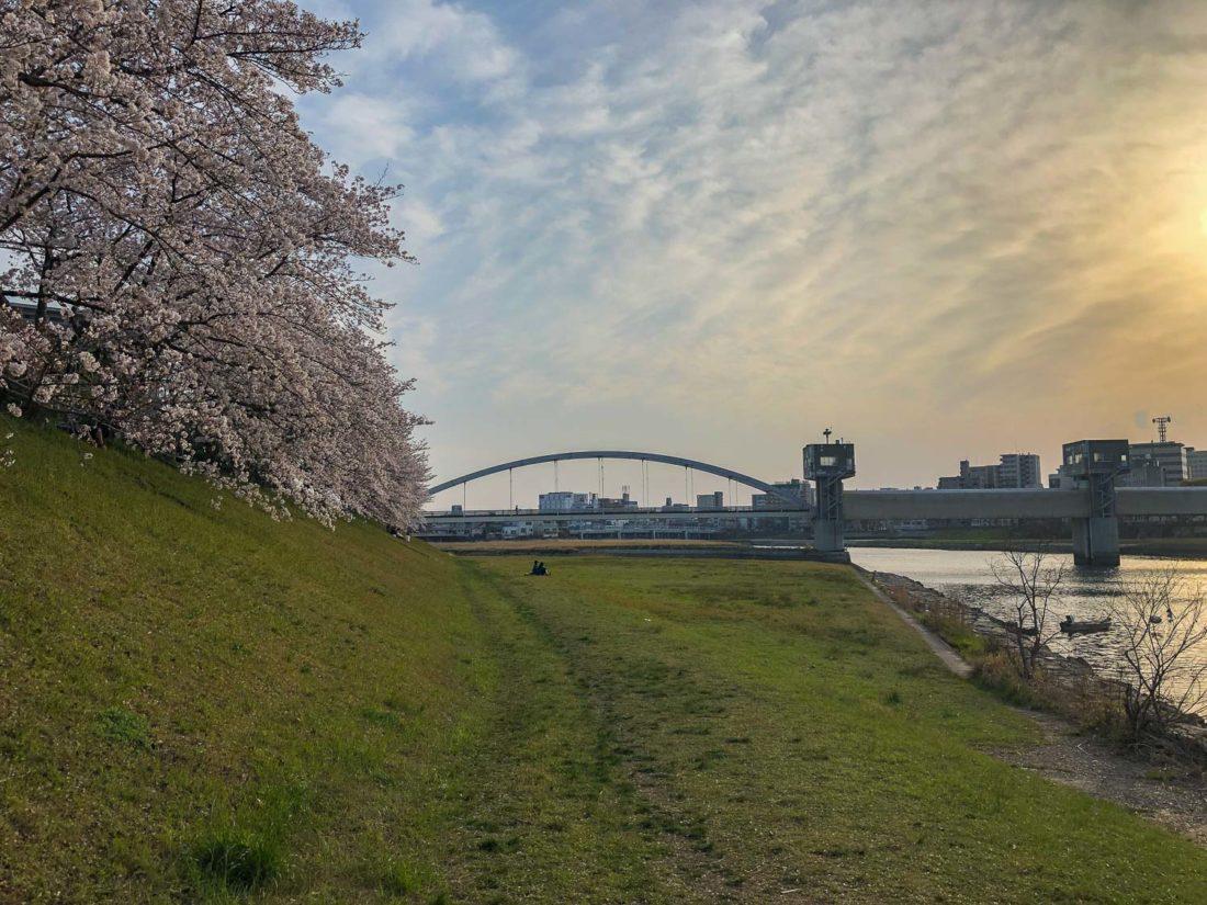 "Asahi River Sakura Road à Okayama ""width ="" 1100 ""height ="" 825"