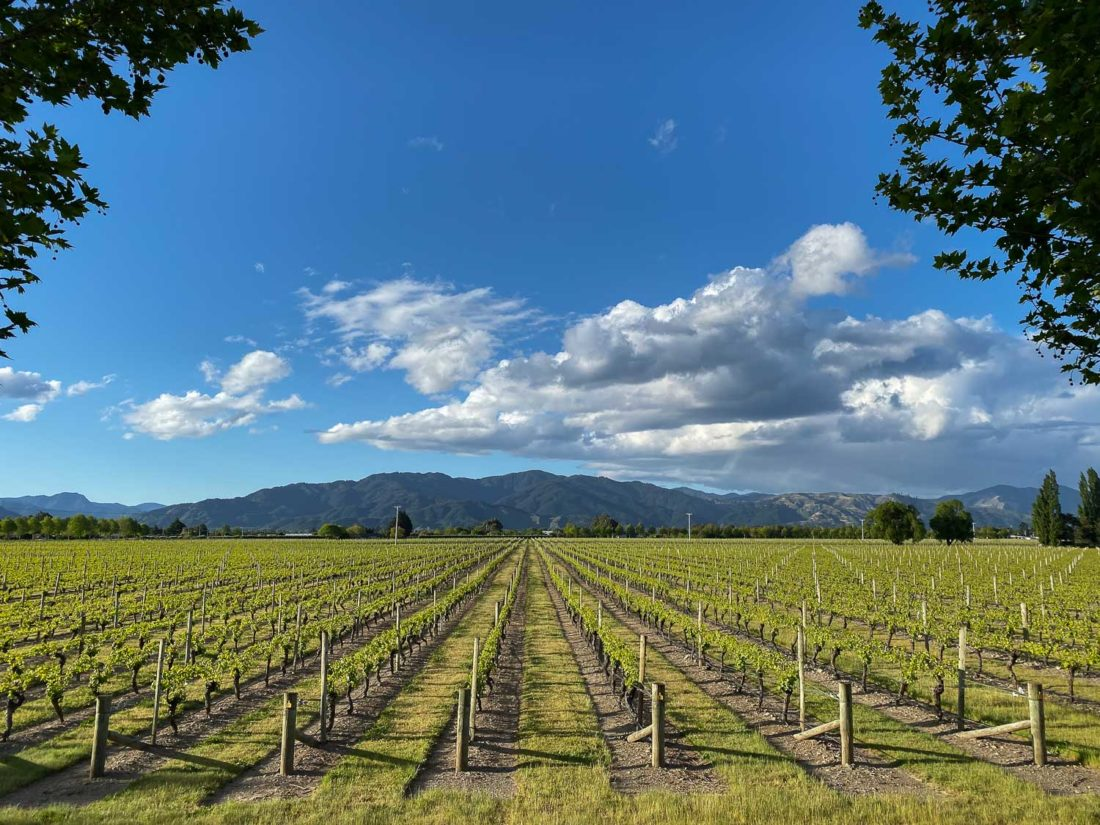 Vignobles de Marlborough, Nouvelle-Zélande