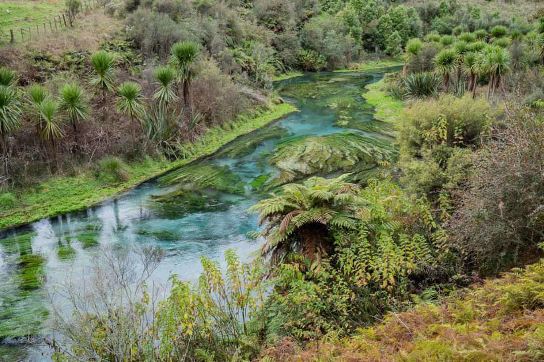 Blue Spring Putaruru sur l'île du Nord de la Nouvelle-Zélande