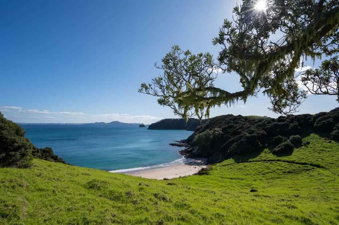 Arbre au-dessus de la baie d'Akeake sur l'île d'Urupukapuka